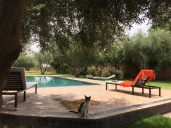 Villas Reference Appartement image #100Marrakesh