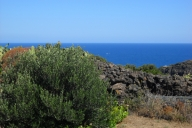 Villas Reference Apartment picture #100Pantelleria